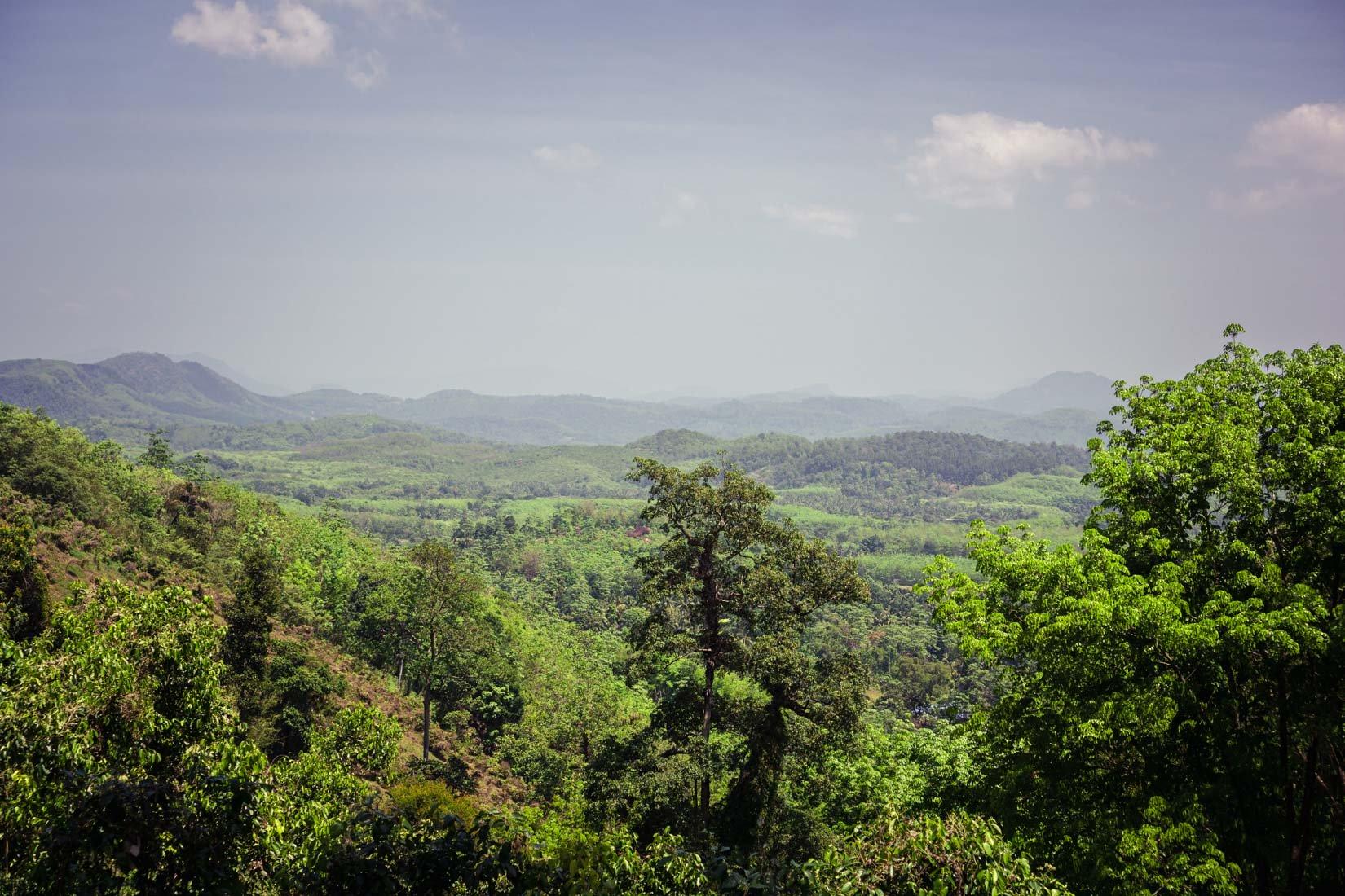 La meilleure cannelle de Ceylan se trouve sur une colline au cœur d'une nature intacte