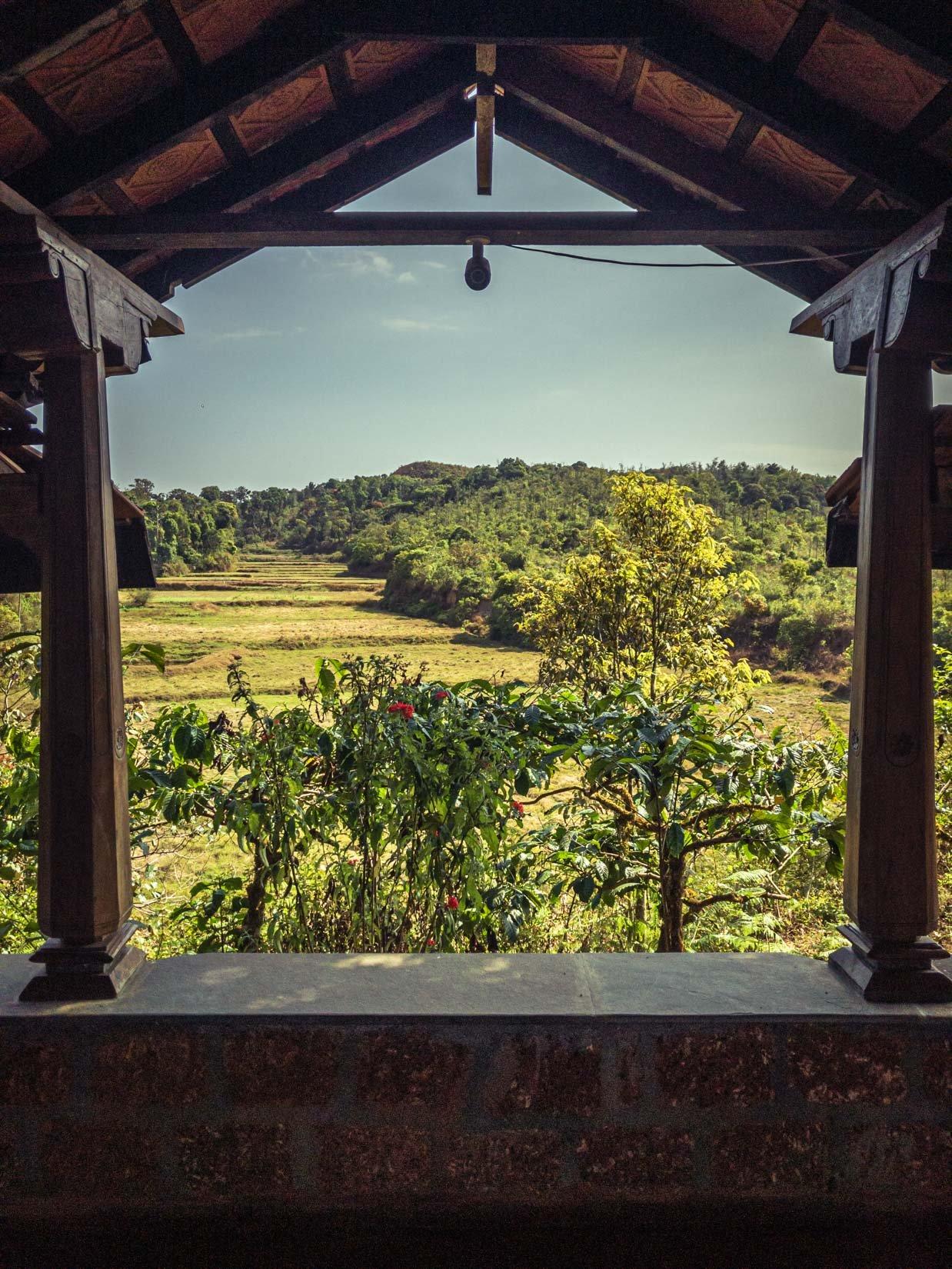 Un jardin d'épices, de thé et de café, véritable paradis de la biodiversité sur la chaîne des Ghats occidentaux au Karnataka
