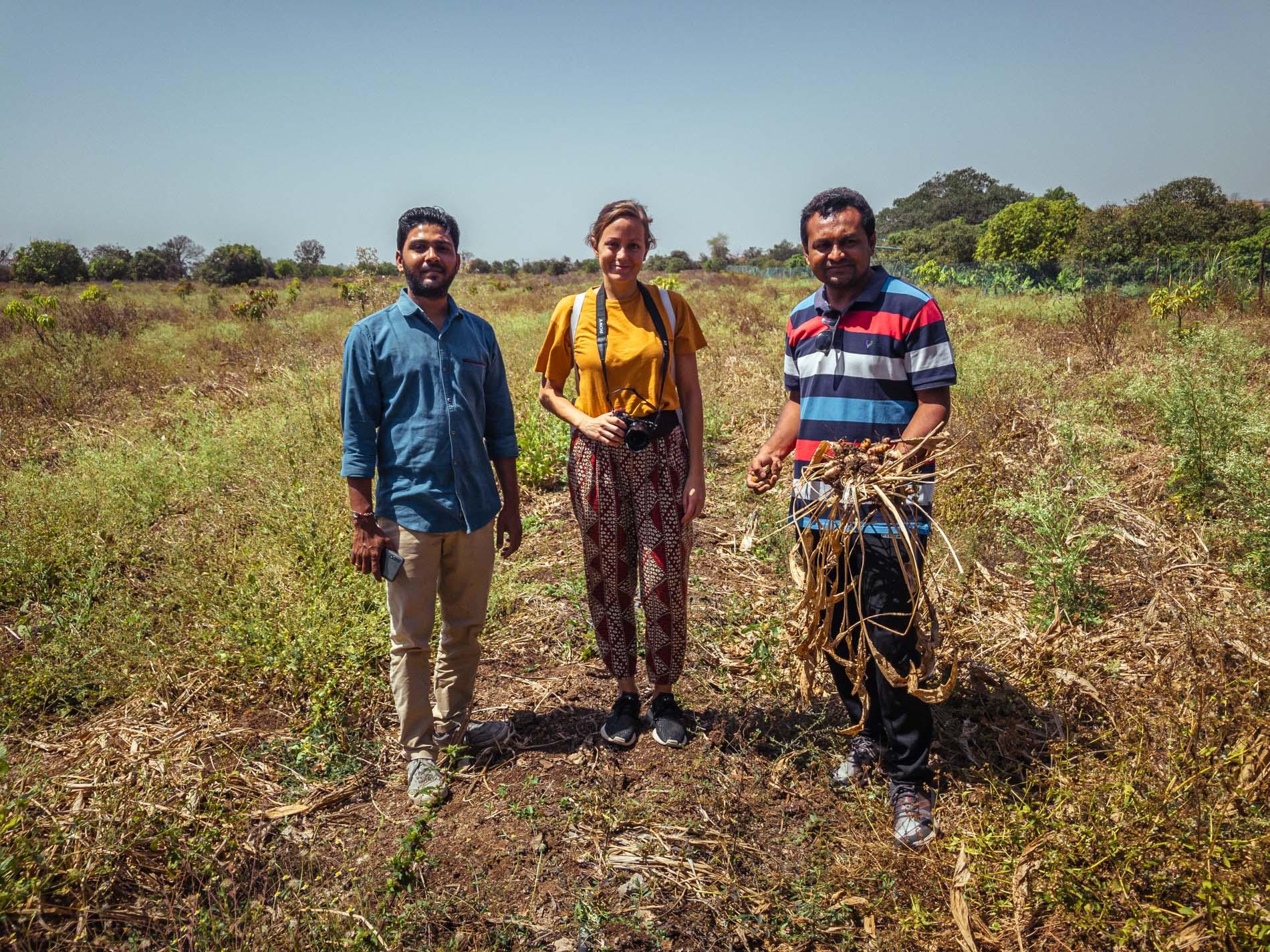 Un curcuma naturel dans les terres d'une immense forêt sèche au fin fond du Gujarat au nord-ouest de l'Inde