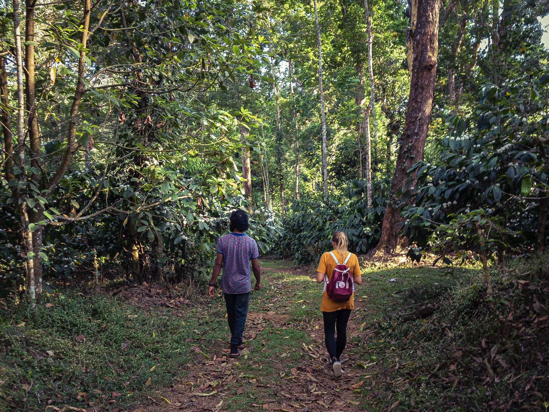 Un modèle d'agroforesterie au cœur de la forêt humide sur la chaîne des Ghâts occidentaux au Karnataka