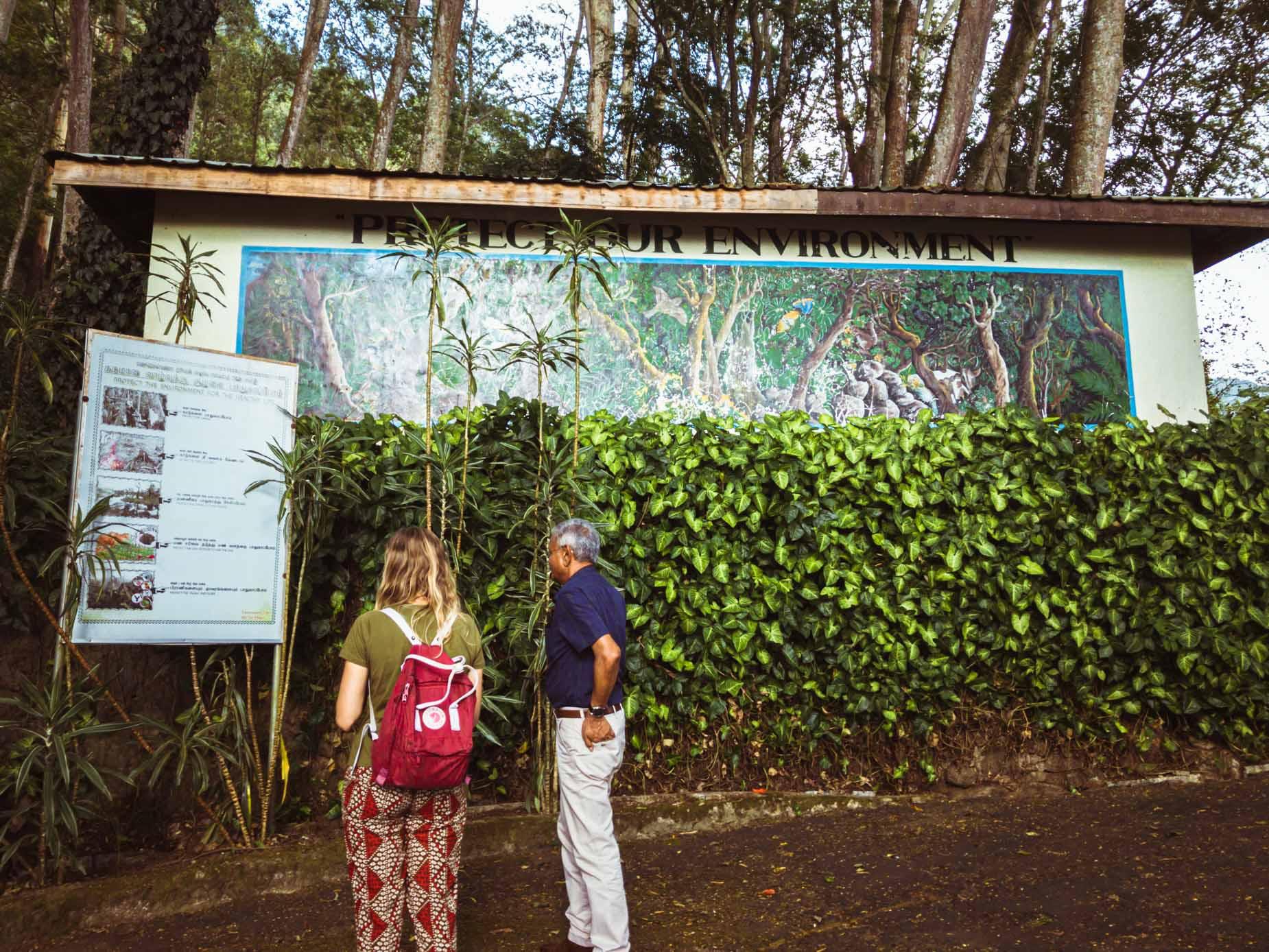 Une visite d'un domaine de thé en biodynamie, en train entre les crêtes brumeuses au cœur des montagnes au Sri Lanka