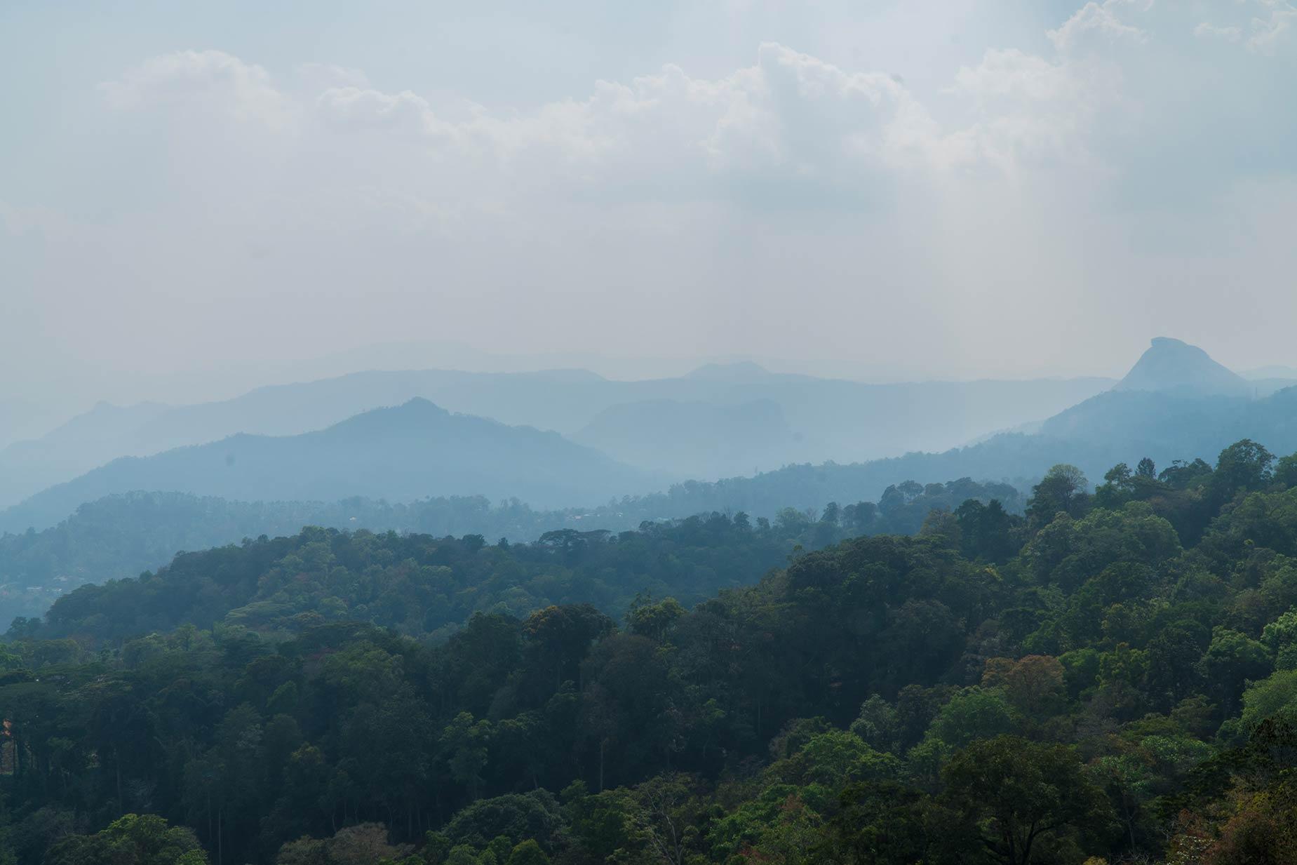 Une ferme unique, aux milles épices, sur les hauteurs des Ghâts occidentaux en Inde